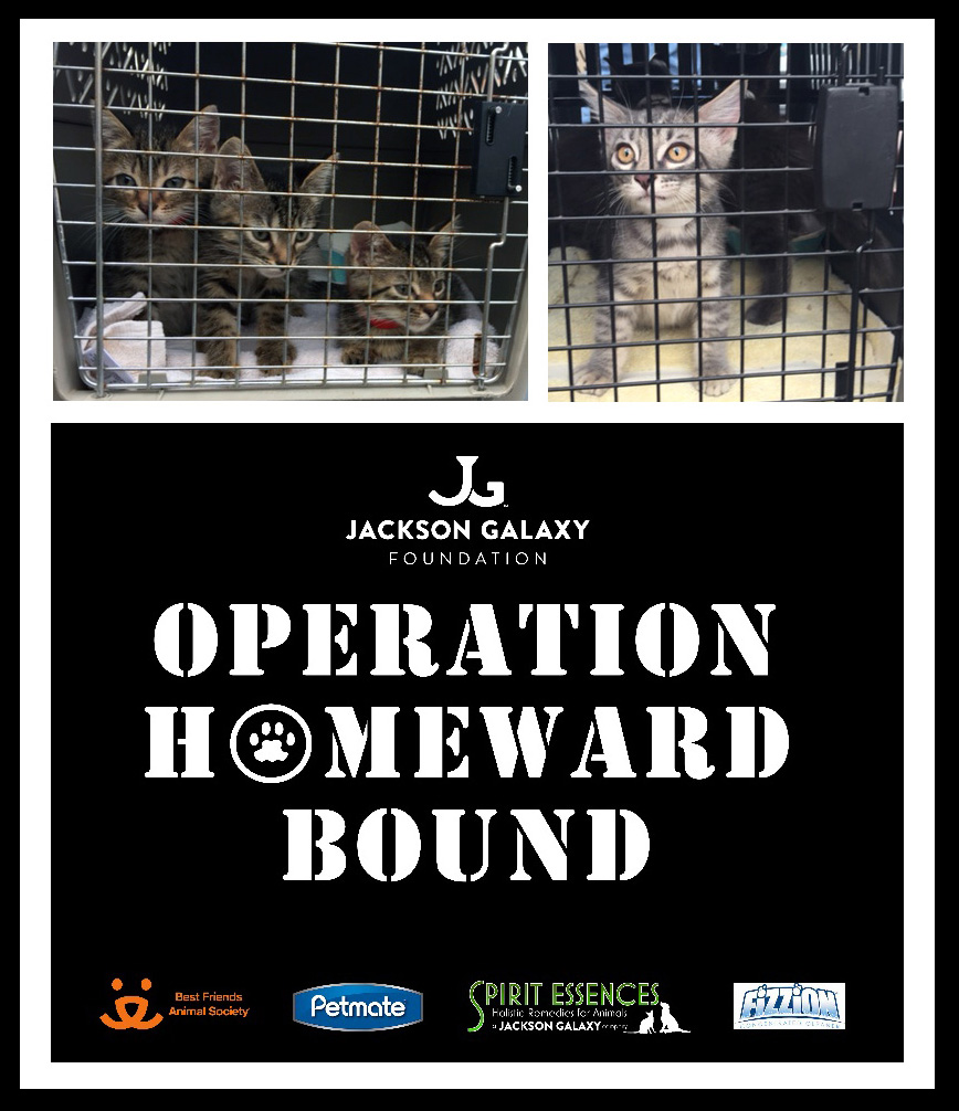 Jackson Galaxy transports dozens of cats and kittens from Los Angeles to Boulder, CO