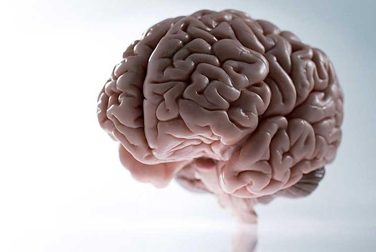 Obat Herbal Alami Penyakit Kanker Otak