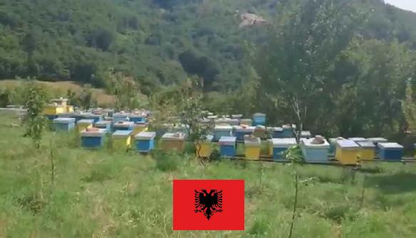 Κάλεσμα στους μελισσοκόμους αναγνώστες από την Αλβανία να επικοινωνήσουν με τον MELISSOCOSMO