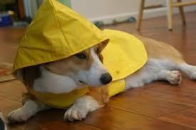 Những bộ quần áo mưa đẹp cho thú cưng của bạn