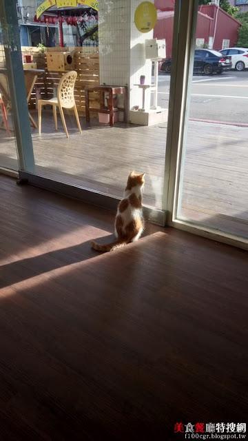 [南部] 高雄市新興區【描Cafe X 屋Brunch】寵物餐廳之貓奴的天堂 貓咪陪同用餐的幸福