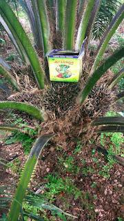 jual pupuk sawit yang bagus untuk buah