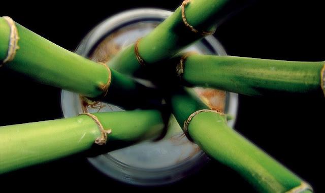 10 Fakta Menarik Tentang Bambu yang Tidak Banyak Orang Tahu