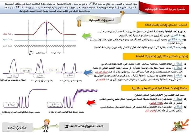 """ملخص رائع في الفصل: """"دور العضلة الهيكلية المخططة في تحويل الطاقة"""" للثانية باك (svt و pc)"""