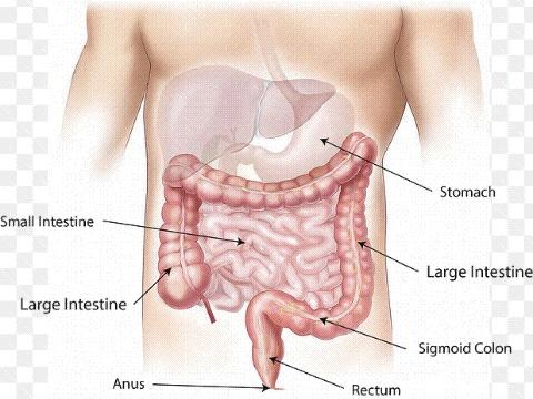 cara mencegah dan mengobat usus buntuk karena penyebab makanan