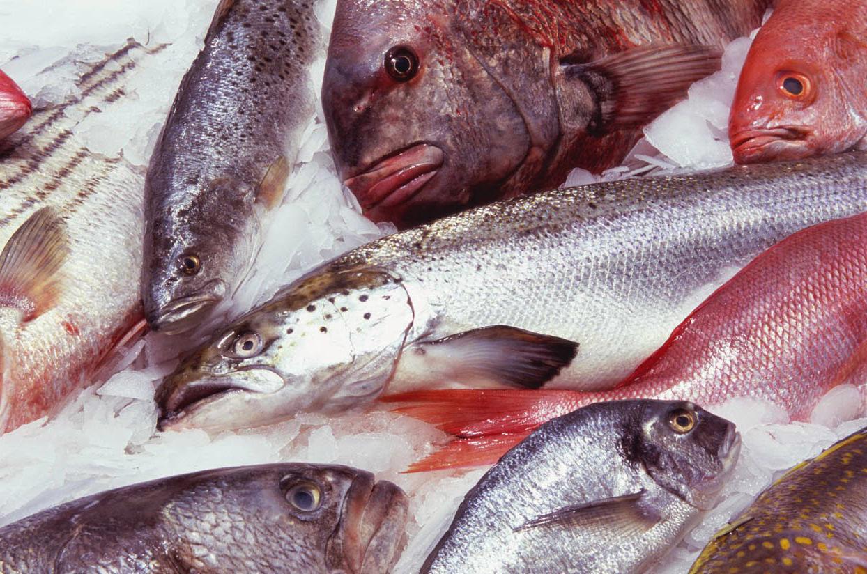 Ciri - Ciri Ikan Awetan dan Tanpa Awetan