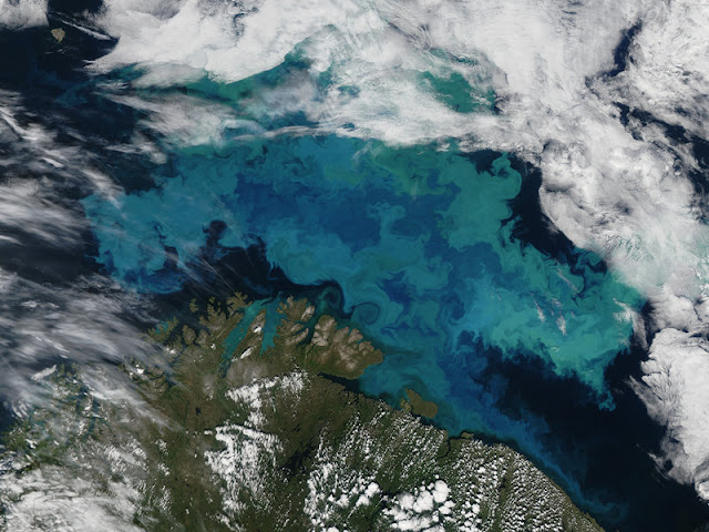 Calcification: Does it pay off in the future ocean?