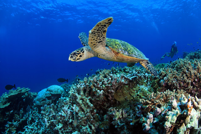 Visit a hatchery of turtles.