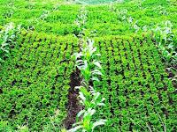 Bagaimana Mempertahankan Kesuburan Tanah