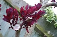 Przycinanie gałęzi na wiosnę. Wosk ze świecy zamiast maści ogrodniczej