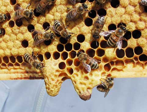 South West Cork Bees: Beginning to keep bees