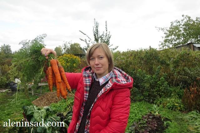 морковь, всходы, лук, севок, всходы, природное земледелие, органическое земледелие, грядки без перекопки, мульча, аленин сад