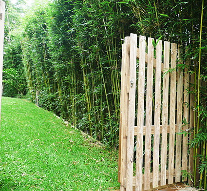 Benefits of living fences 4