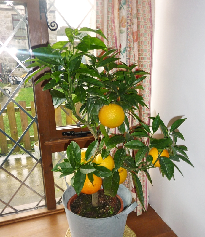 orange-fresh-from-tree