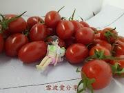果然好甜  玉女 小 番茄   你吃過了嗎?