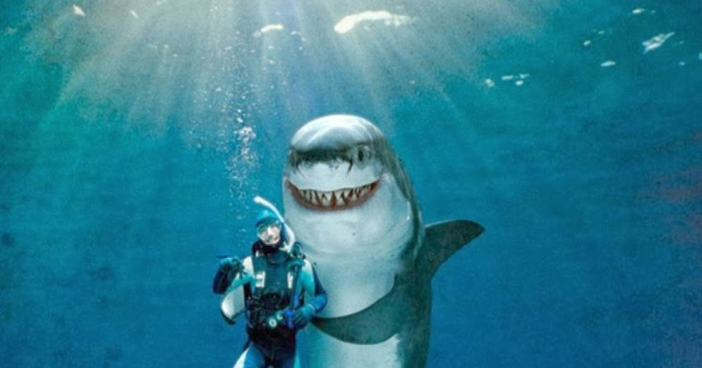 All the Funny Ones ! : Shark Attack Facts
