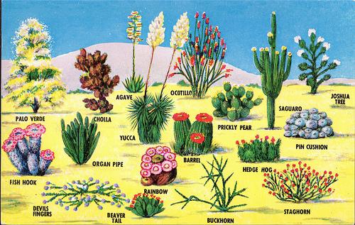 The Taos Unlimited Blog High Desert Plants Wildlife A