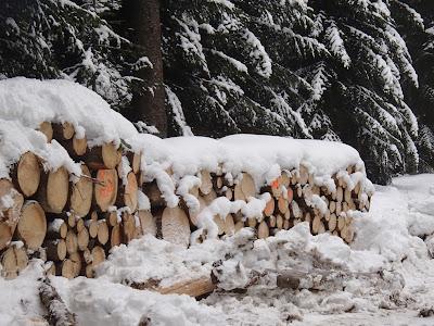 Babia Góra zimą, spacer po zimowym lesie,las w śniegu