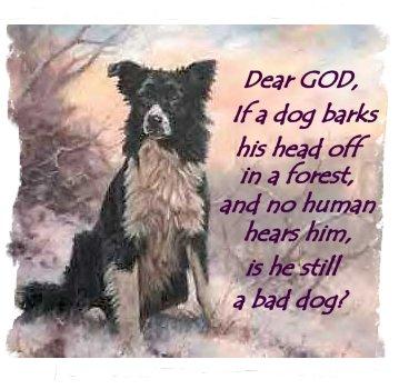 dog christmas sayings funny dogs with sayings funny dog sayings dog    Funny Pictures Of Dogs With Sayings