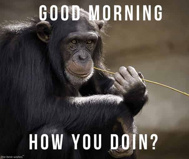 funny monkey good morning photos
