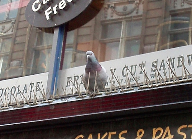control aves urbanas sevilla