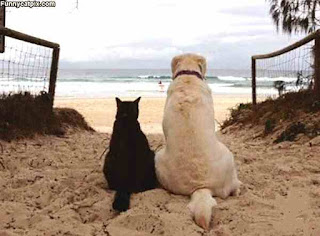 Dog and cat retire to beach