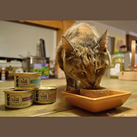 I and Love and You Cat Food review