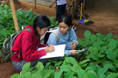 Agroteknologi.web.id Pusat Informasi Ilmu Pertanian