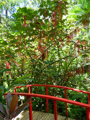 Red bridge Diamond Botanical Gardens Soufriere St. Lucia by garden muses-not another Toronto gardening blog