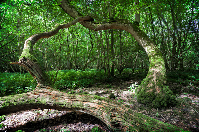 Woodland photography at the Hayley Wood Nature Reserve managed by the Wildlife trust