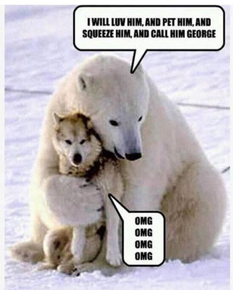 Funny Polar Bear Image Dog