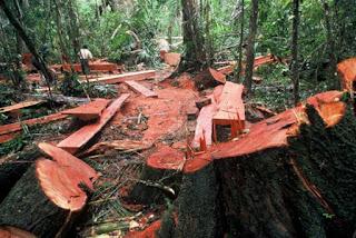 Makalah Hadis Tarbawi (Larangan Illegal Logging)