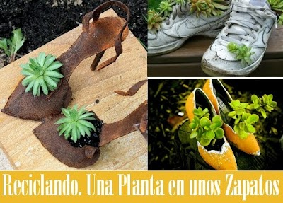 Reciclando plantas en zapatos