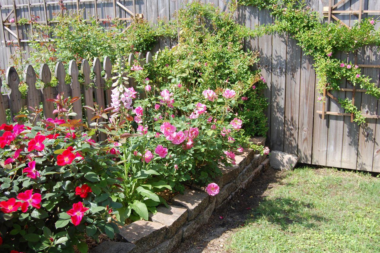 Jeannie's Fairy Rose Louisiana Garden: A Corner of My ...