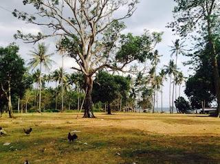 tanah dijual senggigi batu layar 7,5 hektar