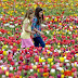 5 μαγικές εικόνες από το φετινό φεστιβάλ τουλίπας στην Ολλανδία