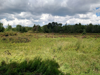 Ojibway prairie restoration windsor ontario ecological