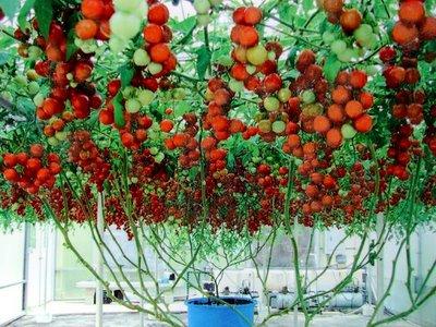 vegetable garden plants