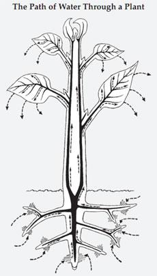 Plant Life: December 2010