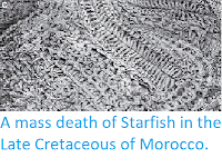 http://sciencythoughts.blogspot.co.uk/2013/12/a-mass-death-of-starfish-in-late.html