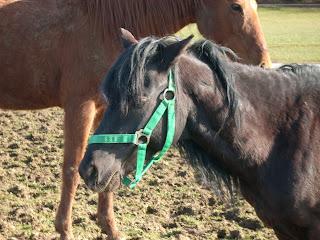 Pferdegeschichte