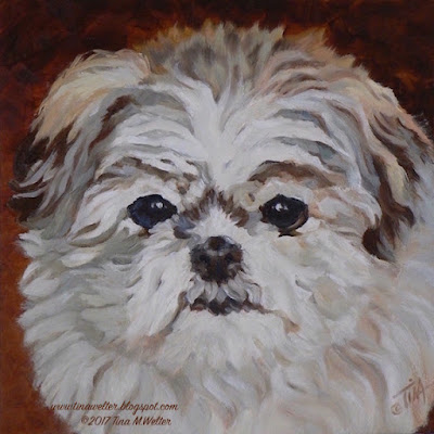 """Sophie"" 8""x 8""in., oil on gessobord, ©2017 Tina M.Welter  Portrait, Miniature Imperial Shih Tzu dog"
