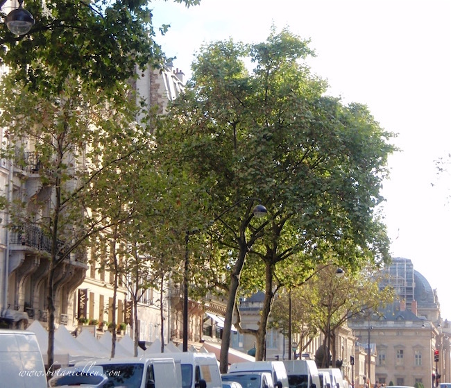 paris-brocante-white-tents-vendor-trucks