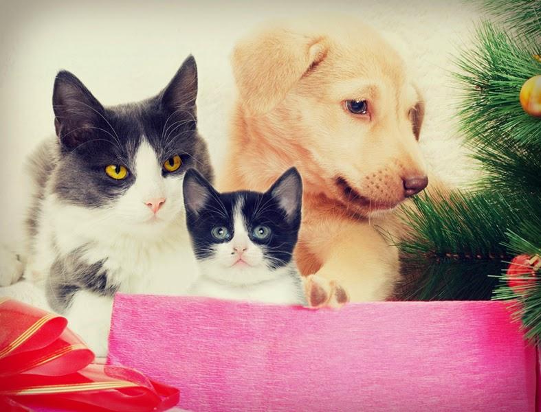 Christmas time pets