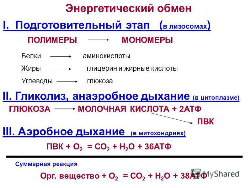 картинка энергетический обмен анализ