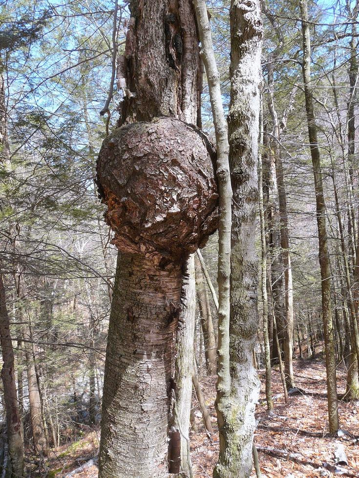 Timberturner Bowlwood Woodturning Barking Up The Right Tree