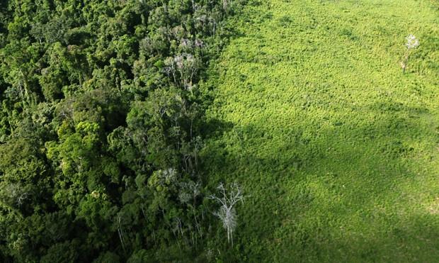 Desmatamento na Amazônia Pode Afetar o Regime de Chuvas no Mundo Inteiro