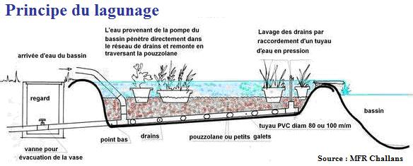 Urban aquaculture vous connaissez c 39 est l 39 aquaculture for Construction bassin aquatique