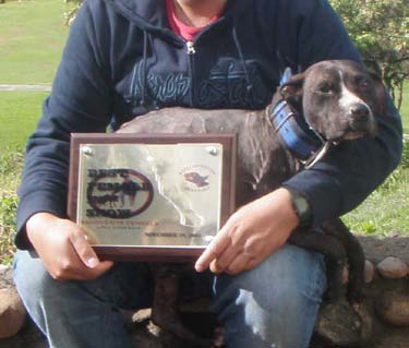 Game Dog World: GR CH BLACKROCKS CHEYENNE 6XW BIS