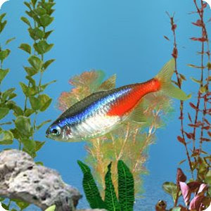 Now you can turn your phone or tablet into real aquarium